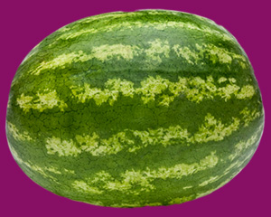 a big watermelon