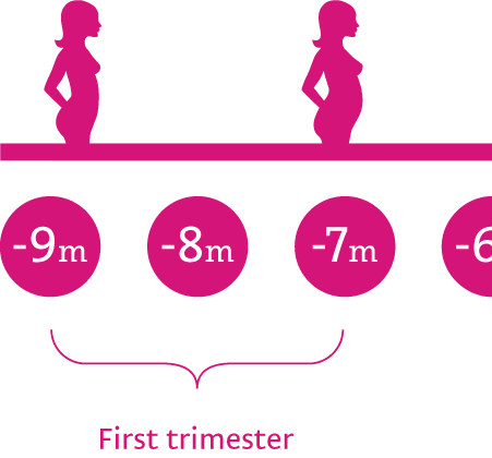 First trimester <br /> (0 - 12 weeks)